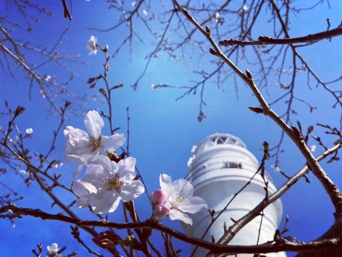 春旅散歩_c0203401_13004860.jpeg