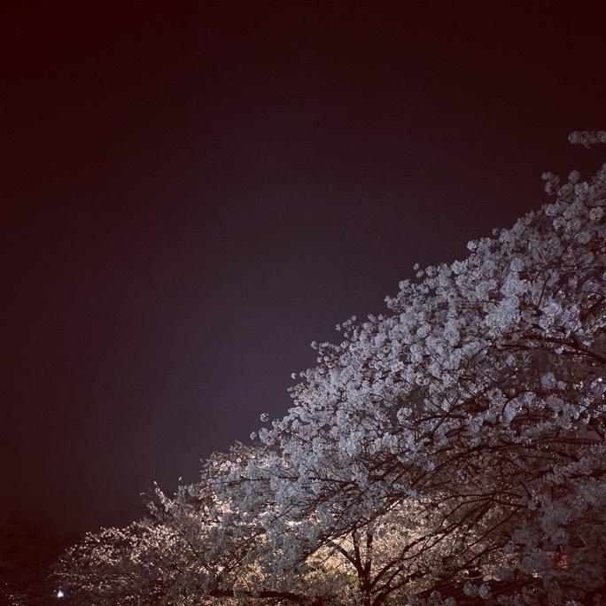 夜桜_c0203401_17315502.jpeg