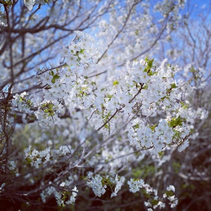 春散歩_c0203401_17400443.jpeg