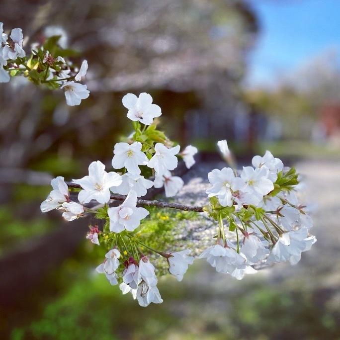 春散歩_c0203401_17402960.jpeg