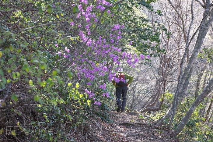 大万木山を歩く(2021/04/07)_b0393210_17034288.jpg
