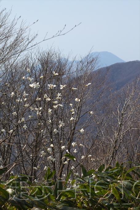 大万木山を歩く(2021/04/07)_b0393210_17044902.jpg