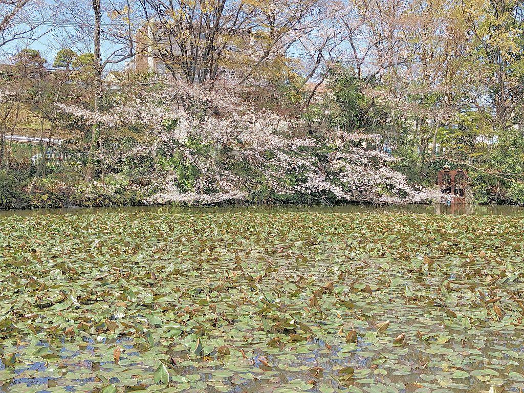 ある風景:Kikuna pond, Yokohama@Mar. 2021_d0393923_23043612.jpg