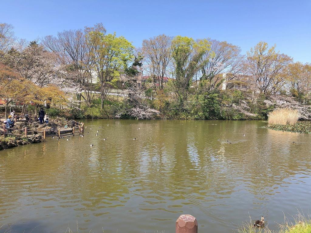 ある風景:Kikuna pond, Yokohama@Mar. 2021_d0393923_23043655.jpg
