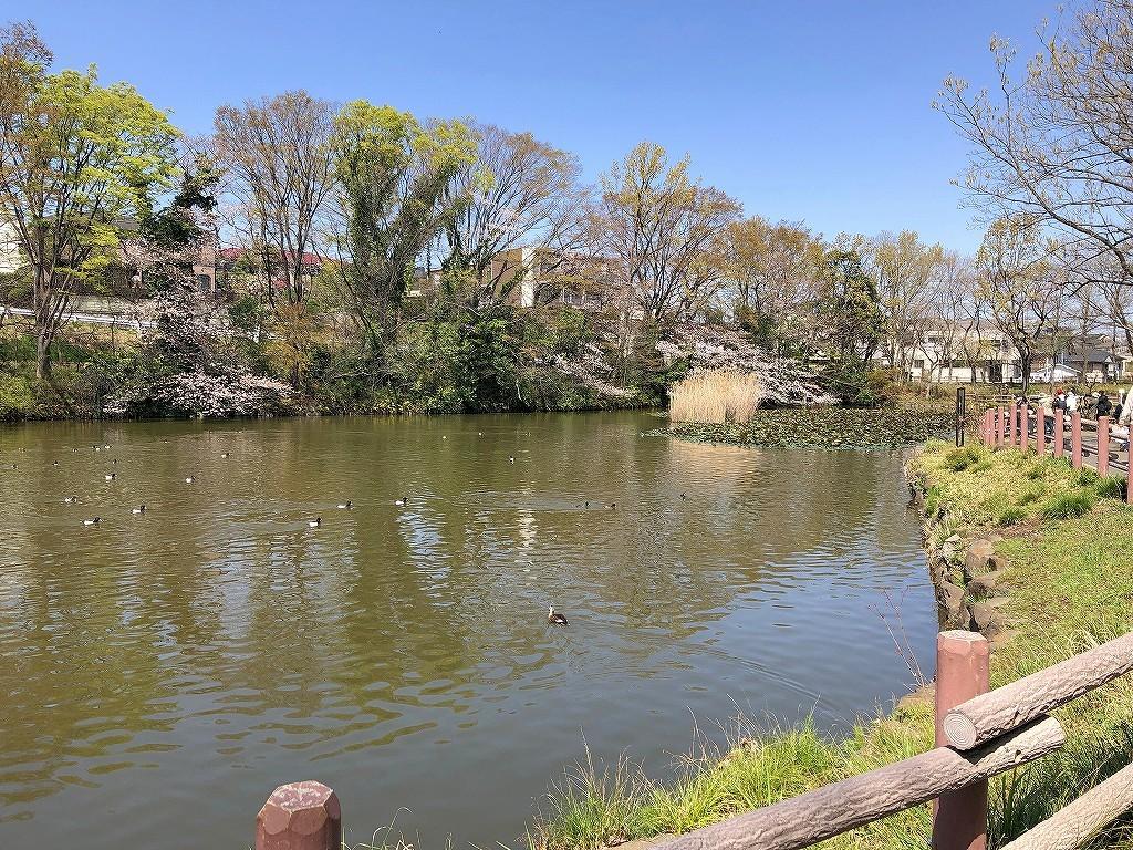 ある風景:Kikuna pond, Yokohama@Mar. 2021_d0393923_23043666.jpg
