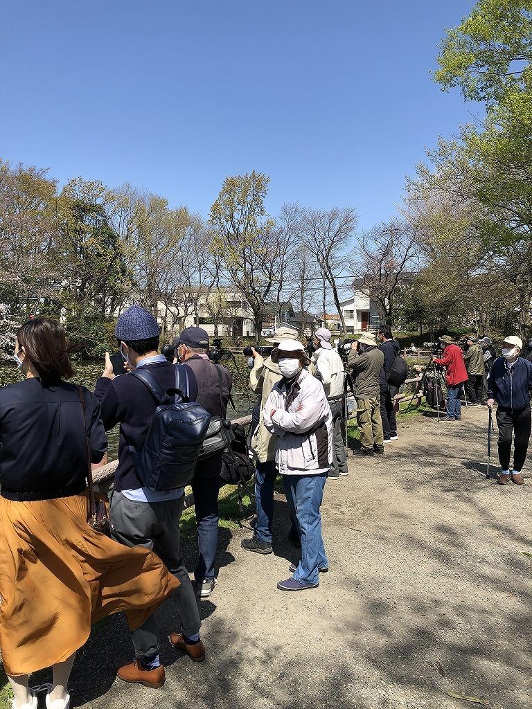 ある風景:Kikuna pond, Yokohama@Mar. 2021_d0393923_23043765.jpg