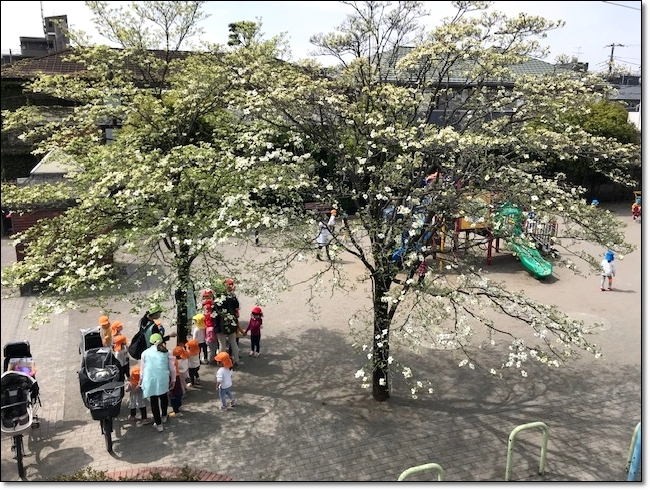今年の…我が家の春の風景~_c0079828_00112603.jpg