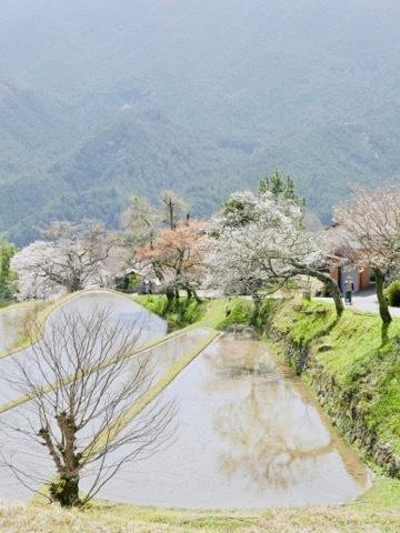 日本に生まれてよかった_b0156734_13285407.jpeg