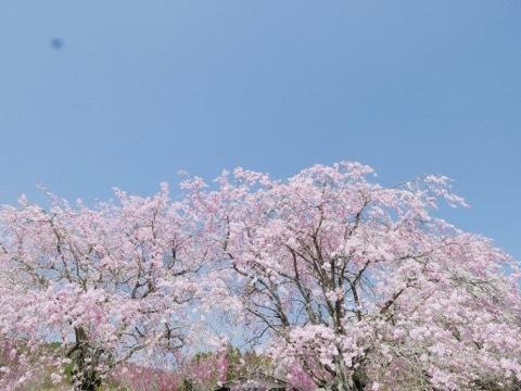 日本に生まれてよかった_b0156734_13291807.jpeg
