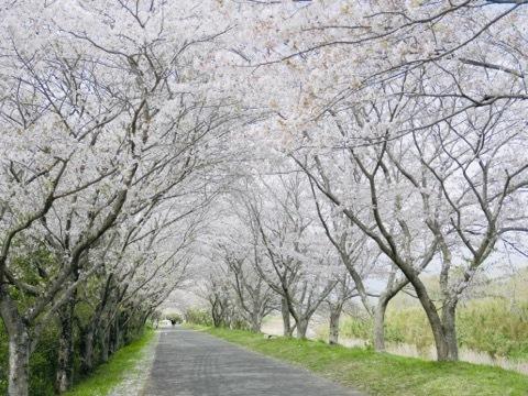 日本に生まれてよかった_b0156734_13313297.jpeg