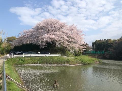 日本に生まれてよかった_b0156734_13323362.jpeg