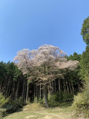 桜_e0110940_05022766.jpeg