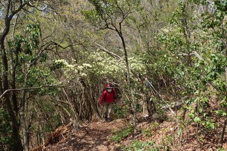 ヒカゲツツジのトンネルを歩こう『丹波 向山』_c0218841_15380678.jpg