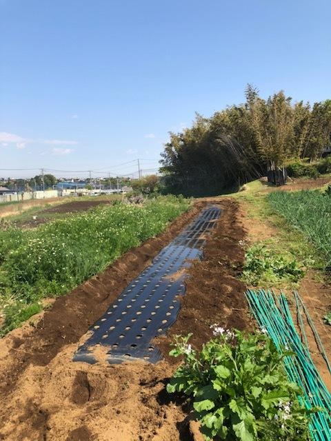 今朝よりトマトの定植 まずは桃太郎から・・・朝晩気温下がるので 穴あきトンネルを張ります 茄子の鉢上げも_c0222448_14144654.jpg