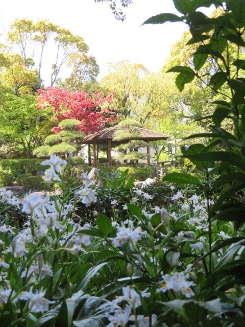 足立区花畑公園 桜花亭の花々_f0329849_21120022.jpg