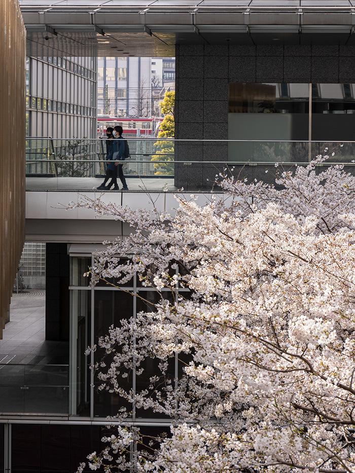 Hello from Tokyo 154 品川の桜_a0003650_22562105.jpg