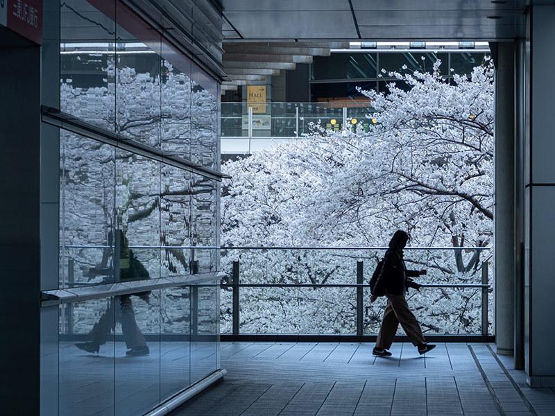 Hello from Tokyo 154 品川の桜_a0003650_23002671.jpg