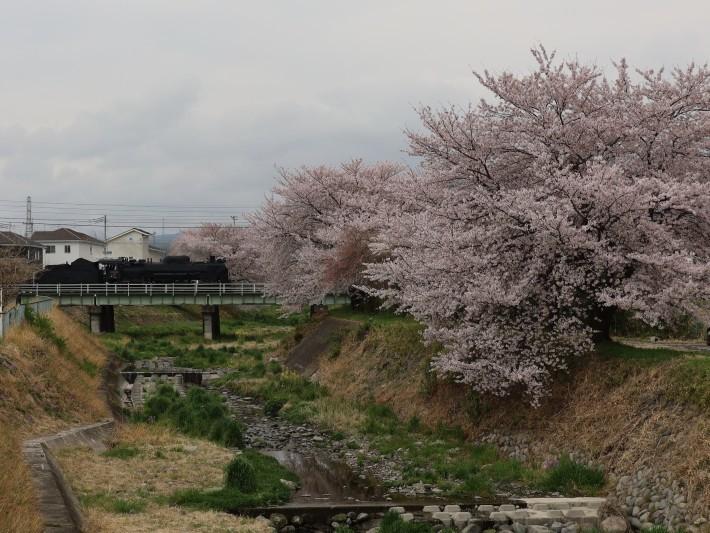 上越線SL ~桜と~ (2021/4/3撮影)_b0369971_13313278.jpg