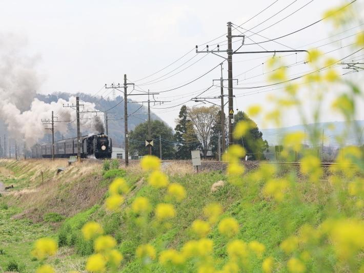 上越線SL ~桜と~ (2021/4/3撮影)_b0369971_13315234.jpg