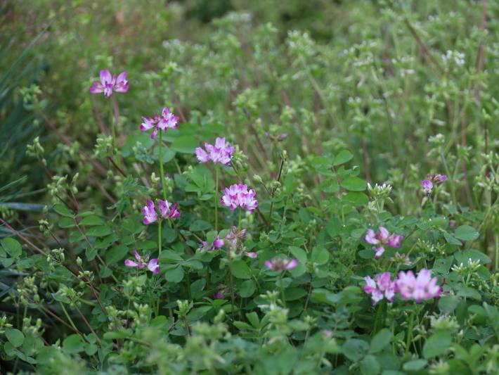 近在で撮った花たち (2021/4/3 5 8 撮影)_b0369971_17263176.jpg