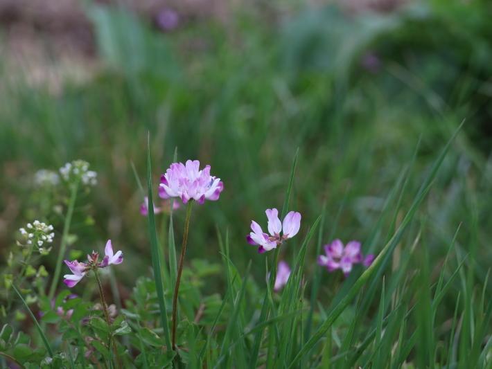 近在で撮った花たち (2021/4/3 5 8 撮影)_b0369971_17263988.jpg