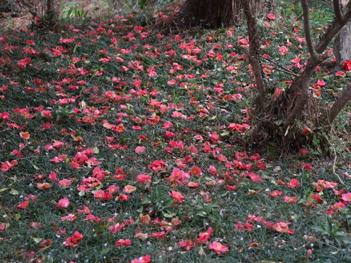 近在で撮った花たち (2021/4/3 5 8 撮影)_b0369971_17285830.jpg