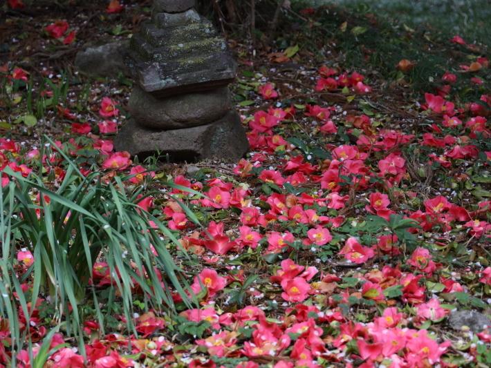 近在で撮った花たち (2021/4/3 5 8 撮影)_b0369971_17290962.jpg