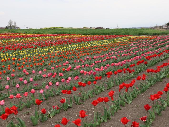近在で撮った花たち (2021/4/3 5 8 撮影)_b0369971_17331889.jpg