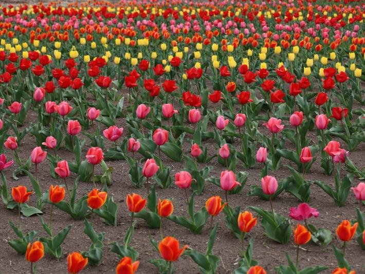 近在で撮った花たち (2021/4/3 5 8 撮影)_b0369971_17341072.jpg