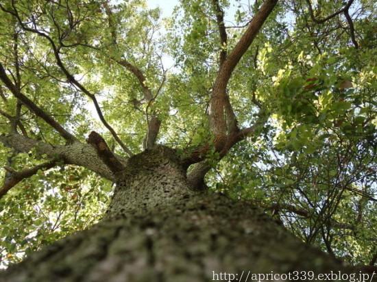 わが家の大きなシンボルツリーと庭しごとの悩み_c0293787_10312269.jpg