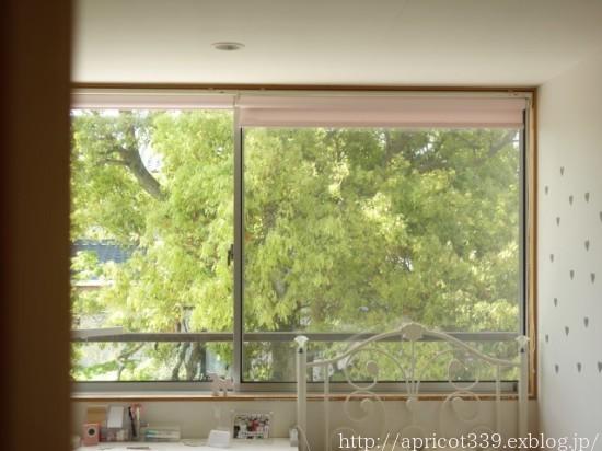 わが家の大きなシンボルツリーと庭しごとの悩み_c0293787_10403391.jpg