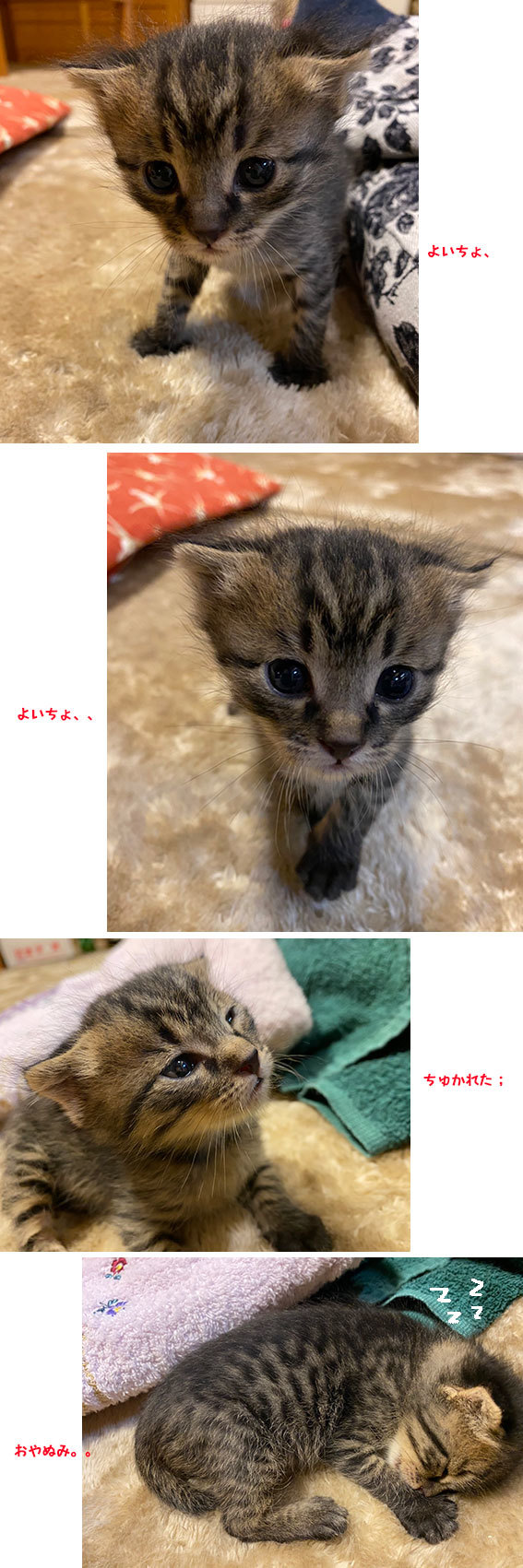 健ときなことあんこと貝ちゃん&フックちゃん_d0071596_00031115.jpg