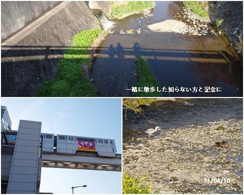 八重の桜 _c0051105_22454878.jpg