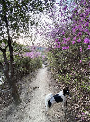 念願の散歩コース_e0103024_23242449.jpg