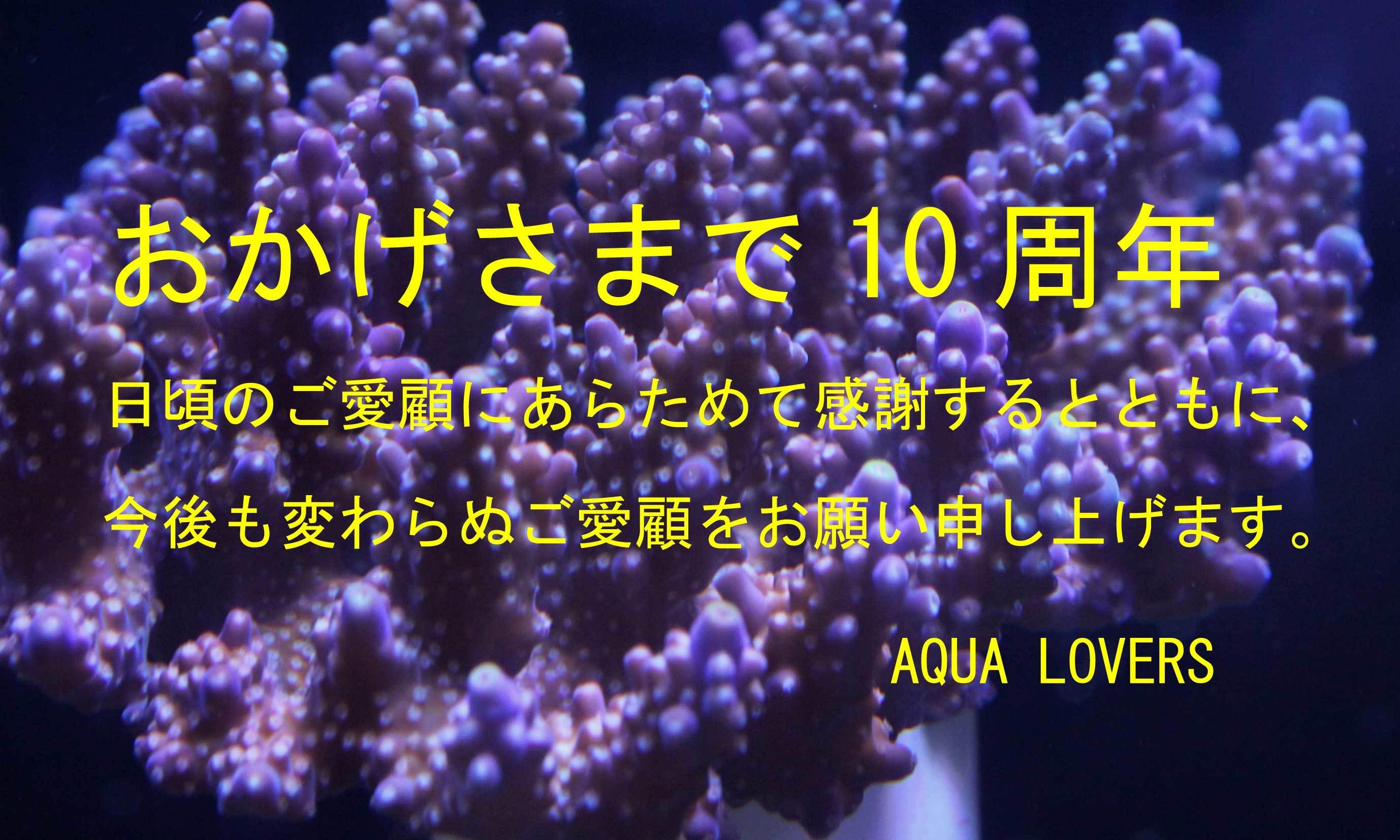感謝、感謝の10周年!!ありがとうございます!_d0221436_12484460.jpg