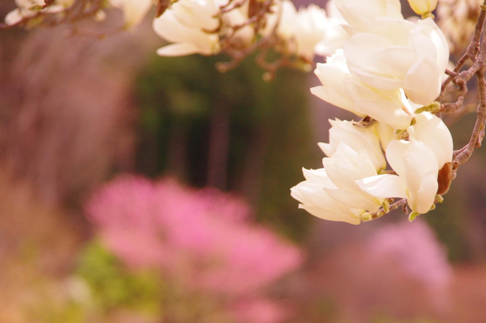 花桃の里_e0291438_16410605.jpg
