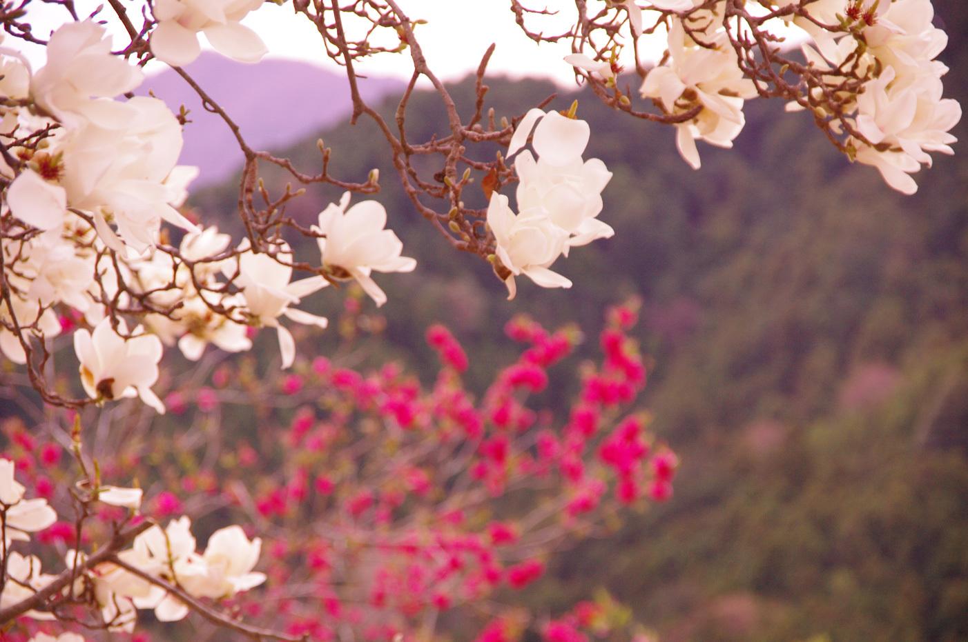 花桃の里_e0291438_16412636.jpg