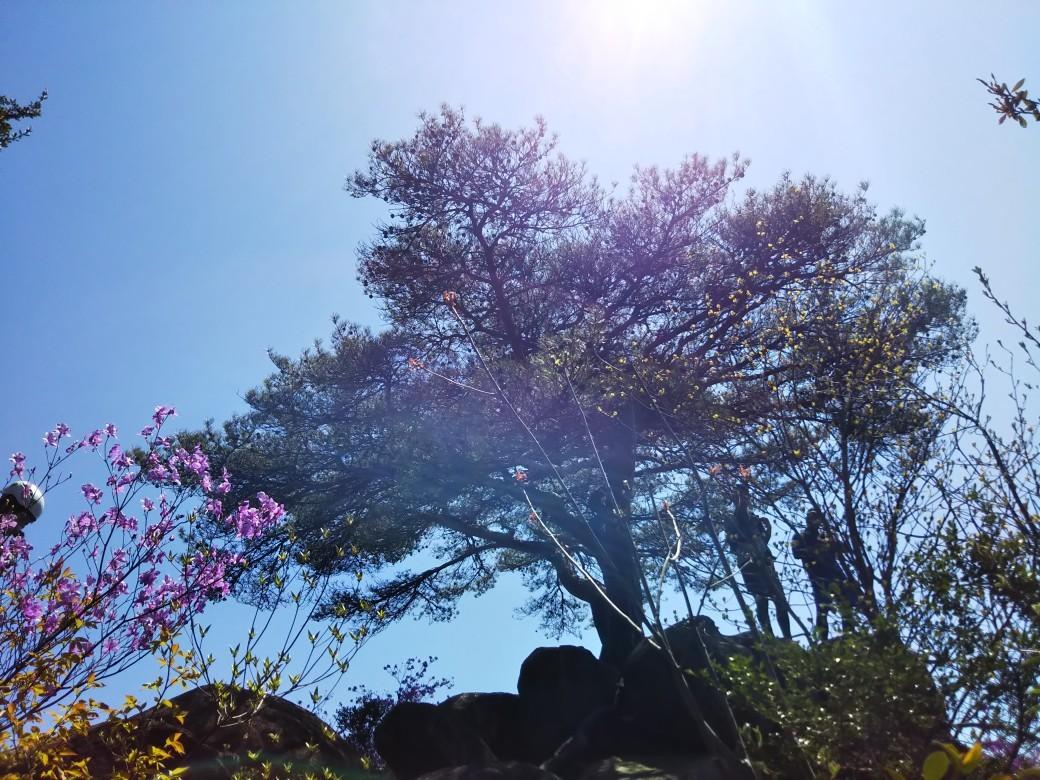 芦屋・道畔谷南尾根_c0218841_19402158.jpg