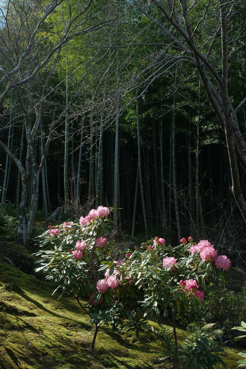 京都 桜 2021_f0021869_17061858.jpg