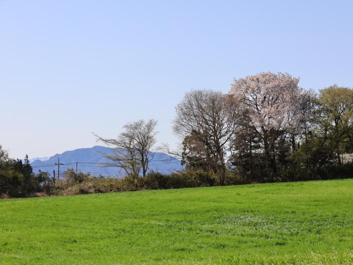 桜だより(22) ~山桜と辛夷~ (2021/4/5撮影)_b0369971_14361309.jpg