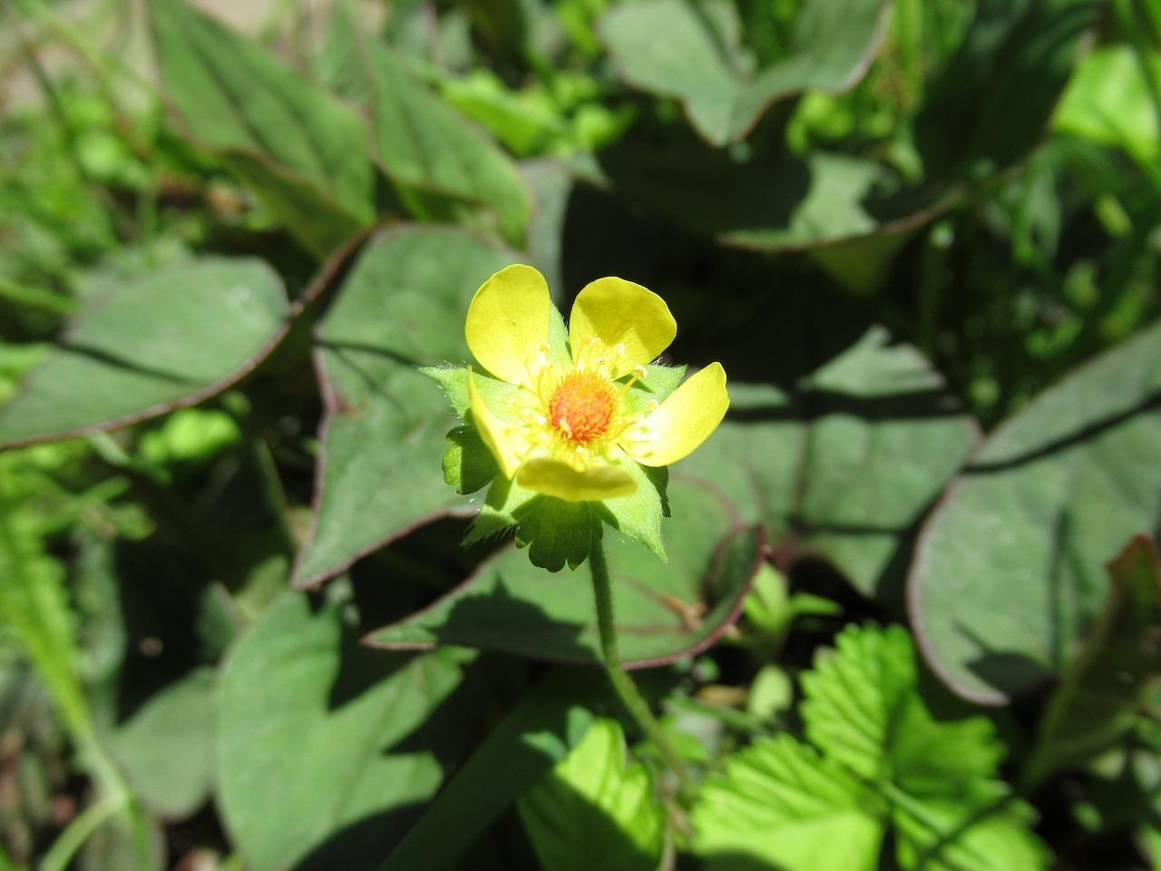 黄色のお花をご紹介◎_f0361087_11112135.jpg