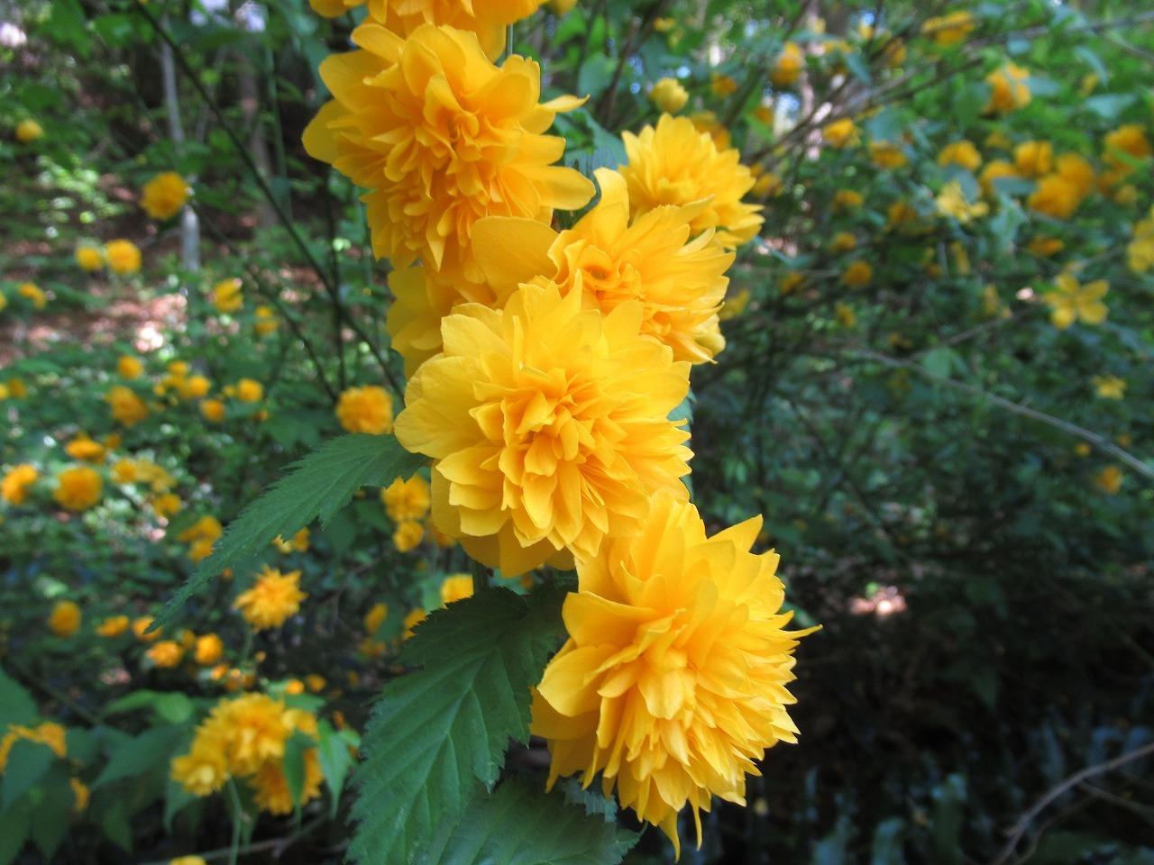 黄色のお花をご紹介◎_f0361087_11112188.jpg