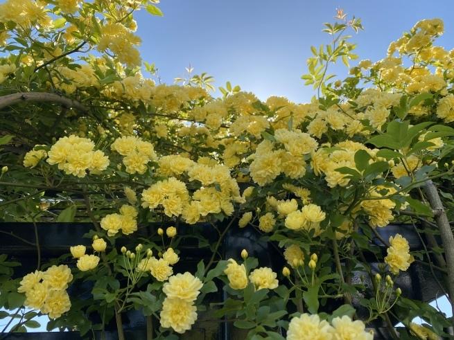 お花と猫ちゃん_b0263390_14571545.jpeg