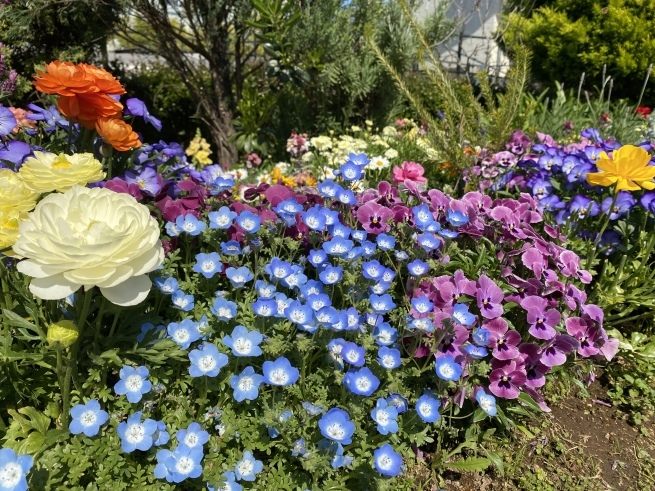 お花と猫ちゃん_b0263390_15113226.jpeg