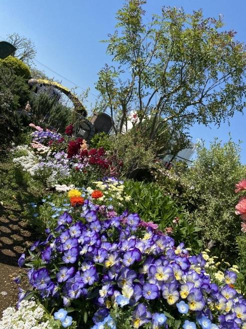 お花と猫ちゃん_b0263390_15120678.jpeg