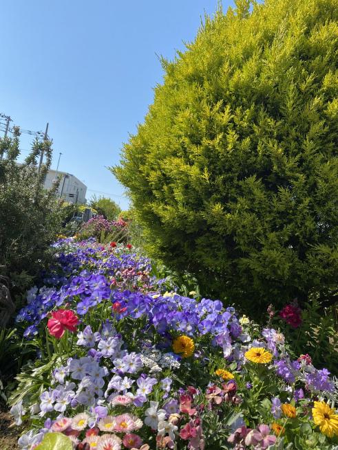 お花と猫ちゃん_b0263390_15134861.jpeg