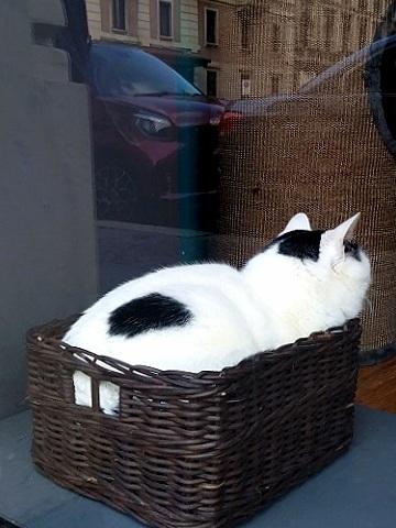 ミラノの猫カフェ (Crazy Cat Café)_d0006400_00470366.jpg