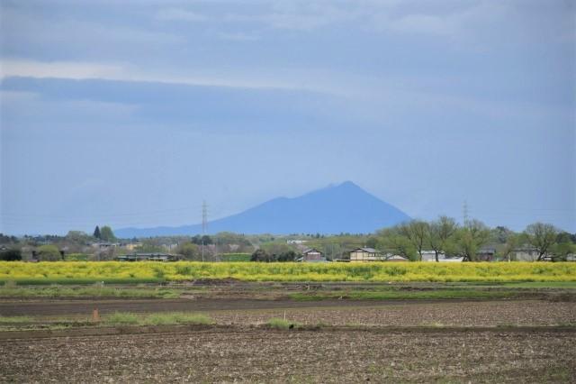 桜巡り2021 ~ 思川桜 - 季節の風を追いかけて