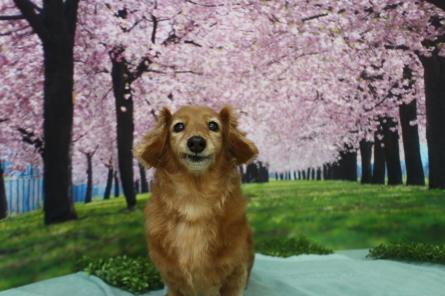 4月11日(日)ドッグラン大仙の様子(^^)_f0170713_17513544.jpg