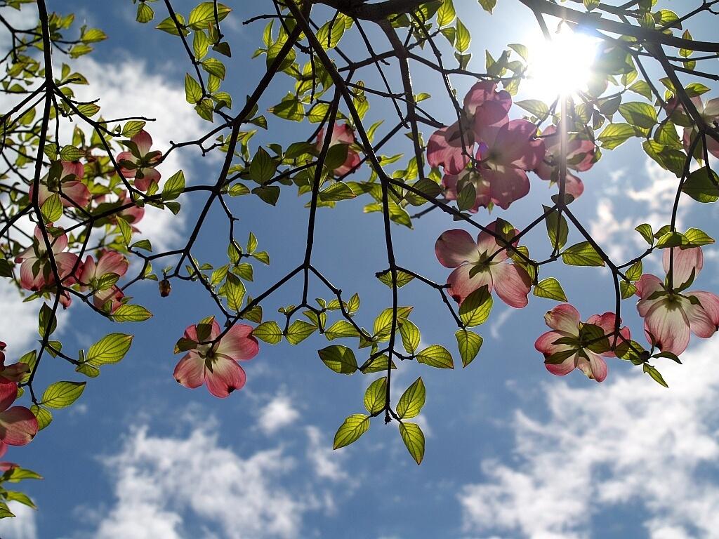 桜の後_a0392522_18220168.jpg